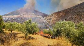 Πρώτη εκτίμηση για την πυρκαγιά στον αρχαιολογικό χώρο των Μυκηνών Μυκήνες Μυκήνες: Πρώτη εκτίμηση για την πυρκαγιά στον αρχαιολογικό χώρο                1 275x150