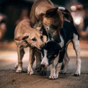 Ο Δήμος Λεβαδέων θα αποκτήσει καταφύγιο αδέσποτων ζώων  Ο Δήμος Λεβαδέων θα αποκτήσει καταφύγιο αδέσποτων ζώων three 3249952 640 180x180