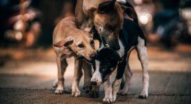 Ο Δήμος Λεβαδέων θα αποκτήσει καταφύγιο αδέσποτων ζώων  Ο Δήμος Λεβαδέων θα αποκτήσει καταφύγιο αδέσποτων ζώων three 3249952 640 275x150