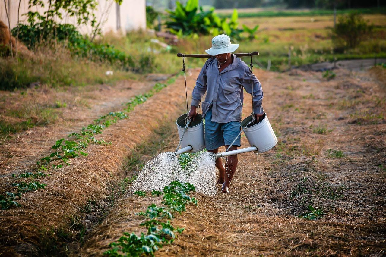 Τροπολογία για τους εργάτες γης από τρίτες χώρες Σπήλιος Λιβανός Σπήλιος Λιβανός: Δεκτή η μετακίνηση εργατών γης τρίτων χωρών watering 1501209 1280