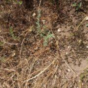 Σε απόγνωση οι μελισσοκόμοι στην περιοχή της Μακρακώμης  Σε απόγνωση οι μελισσοκόμοι στην περιοχή της Μακρακώμης                                               1 180x180