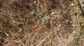 Σε απόγνωση οι μελισσοκόμοι στην περιοχή της Μακρακώμης  Σε απόγνωση οι μελισσοκόμοι στην περιοχή της Μακρακώμης                                               1 275x150