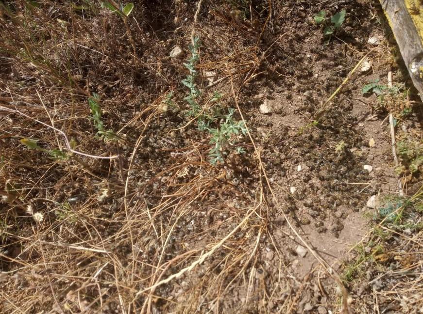 Σε απόγνωση οι μελισσοκόμοι στην περιοχή της Μακρακώμης  Σε απόγνωση οι μελισσοκόμοι στην περιοχή της Μακρακώμης                                               1