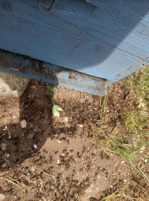Σε απόγνωση οι μελισσοκόμοι στην περιοχή της Μακρακώμης  Σε απόγνωση οι μελισσοκόμοι στην περιοχή της Μακρακώμης                                               2