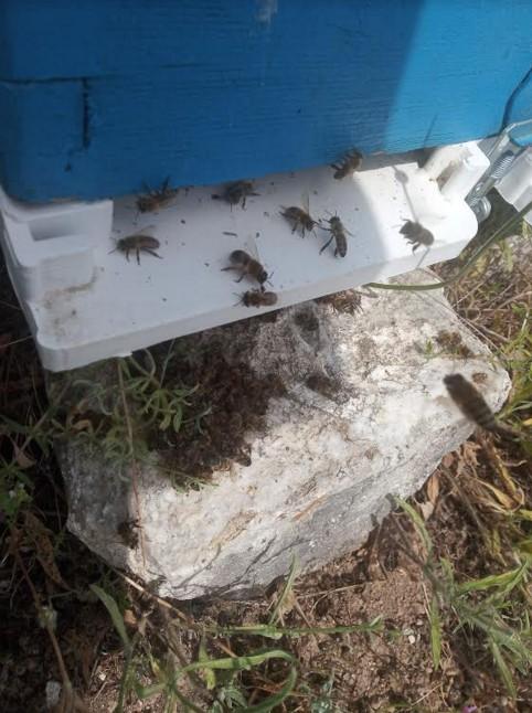 Σε απόγνωση οι μελισσοκόμοι στην περιοχή της Μακρακώμης  Σε απόγνωση οι μελισσοκόμοι στην περιοχή της Μακρακώμης                                               3