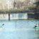 Ξανά η βαρκάδα στον Ληθαίο, αλλά μόνο με μάσκα Τρίκαλα Τρίκαλα: Βαρκάδα μόνο με μάσκα στον Ληθαίο ποταμό BARKA 55x55