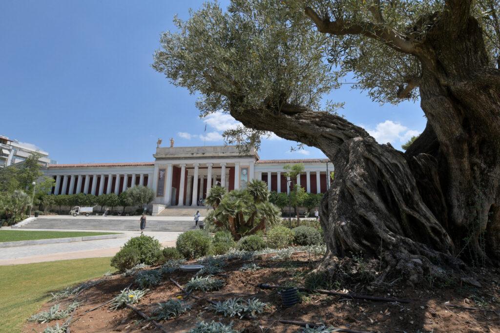 Εθνικό Αρχαιολογικό Μουσείο Το Εθνικό Αρχαιολογικό Μουσείο έχει νέο κήπο DSC 7911 1024x682