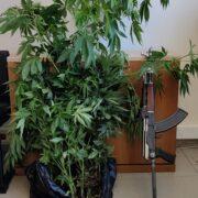 Σύλληψη καλλιεργητή ναρκωτικών στο Ηράκλειο Κρήτης  Σύλληψη καλλιεργητή ναρκωτικών στο Ηράκλειο Κρήτης                                                                                                 180x180