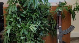 Σύλληψη καλλιεργητή ναρκωτικών στο Ηράκλειο Κρήτης  Σύλληψη καλλιεργητή ναρκωτικών στο Ηράκλειο Κρήτης                                                                                                 275x150