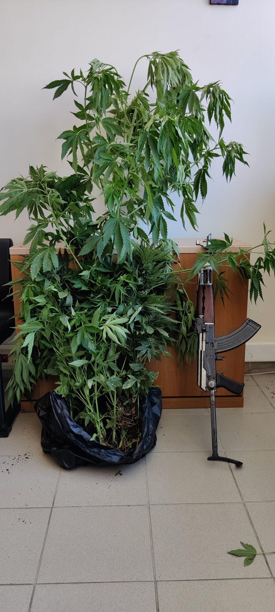 Σύλληψη καλλιεργητή ναρκωτικών στο Ηράκλειο Κρήτης  Σύλληψη καλλιεργητή ναρκωτικών στο Ηράκλειο Κρήτης                                                                                                 950x2111