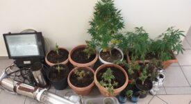 Σύλληψη καλλιεργητή ναρκωτικών στη Σάμο  Σύλληψη καλλιεργητή ναρκωτικών στη Σάμο 05062021vorio 275x150
