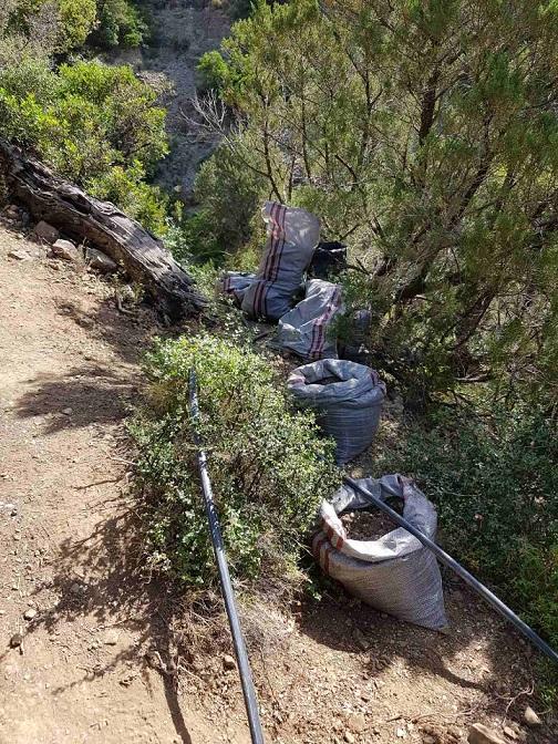 Φυτεία με 1.300 δενδρύλλια κάνναβης στην Καλλιθέα Φωκίδας 24062021stereameg2