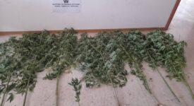 Σύλληψη για ναρκωτικά στην Αργολίδα  Σύλληψη για ναρκωτικά στην Αργολίδα                                                                    275x150