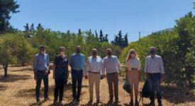 Επίσκεψη Γιάννη Οικονόμου στο Ινστιτούτο Ελιάς, Υποτροπικών Φυτών και Αμπέλου  Επίσκεψη Γιάννη Οικονόμου στο Ινστιτούτο Ελιάς, Υποτροπικών Φυτών και Αμπέλου Photo4 1 275x150