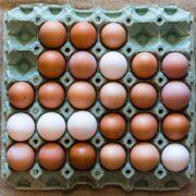 Αποσύρθηκαν 34,5 τόνοι κοτόπουλου και δεκάδες χιλιάδες αυγών ως δήθεν βιολογικά  Αποσύρθηκαν 34,5 τόνοι κοτόπουλου και δεκάδες χιλιάδες αυγών ως δήθεν βιολογικά eggs 6228077 640 180x180