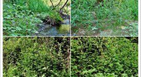 Εντοπισμός φυτείας με 904 δενδρύλλια κάνναβης στη Φθιώτιδα                                          904                                                               275x150