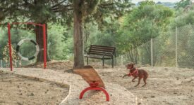 Πάρκο σκύλων με ανακυκλωμένα υλικά στα Τρίκαλα                                                                                        275x150