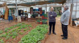 Ραφήνα: Σε δημόσια διαβούλευση η προδημοσίευση για τις βιολογικές καλλιέργειες                                                                                                                                      275x150