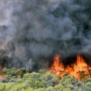 Φάνης Σπανός: Παλεύουμε για 8η ημέρα με τις φλόγες-Να μην χαθεί άλλος χρόνος                              180x180