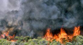 Φάνης Σπανός: Παλεύουμε για 8η ημέρα με τις φλόγες-Να μην χαθεί άλλος χρόνος                              275x150