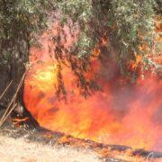 Μεγάλη πυρκαγιά στη Φωκίδα-Κάηκαν σπίτια σε Ελαία και Καλλιθέα  Μεγάλη πυρκαγιά στη Φωκίδα-Κάηκαν σπίτια σε Ελαία και Καλλιθέα E762tp WYAMnwne 180x180