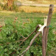 Βανδάλισαν 5 δέντρα στο πάρκο Πυργετού των Τρικάλων pirg2a 180x180