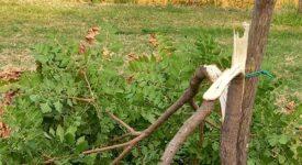 Βανδάλισαν 5 δέντρα στο πάρκο Πυργετού των Τρικάλων pirg2a 275x150