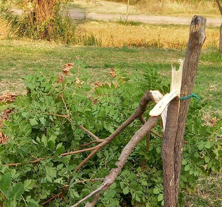 Βανδάλισαν 5 δέντρα στο πάρκο Πυργετού των Τρικάλων pirg2a