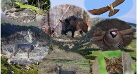 Παγκόσμια Ημέρα Άγριας Ζωής                   275x150
