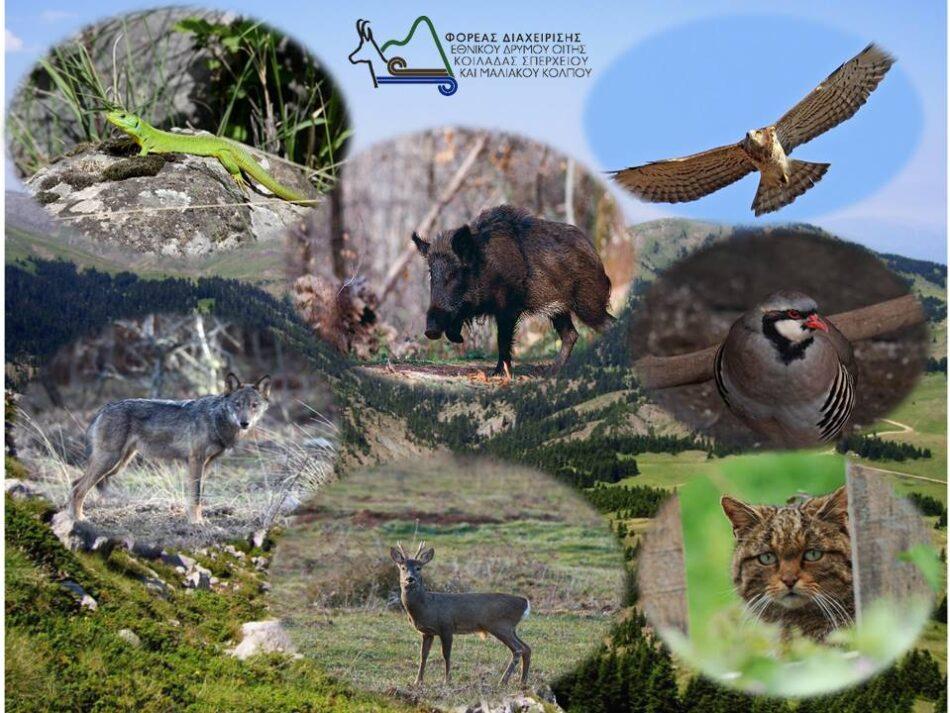 Παγκόσμια Ημέρα Άγριας Ζωής                   950x713