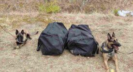 Η Minnie και η Iris εντόπισαν 21 κιλά κάνναβης σε δάσος στο Κιλκίς 20092021kenmak001 275x150