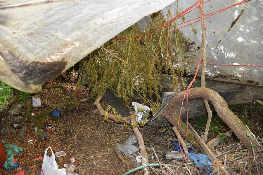 Εντοπίστηκε φυτεία δενδρυλλίων κάνναβης στη Μεσσηνία 20092021pel001