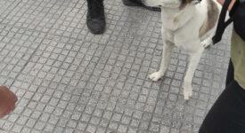 Έλεγχοι σε δεσποζόμενα ζώα συντροφιάς στη Θεσσαλονίκη 04102021zoathes002 275x150