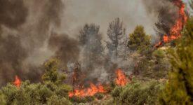 Πυρκαγιά στην Αγία Άννα Βοιωτίας flegomeno dasos 275x150