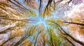 Είναι η ώρα να επιμείνουμε στην λογική της αειφορίας και της βιωσιμότητας trees 5605176 1280 275x150